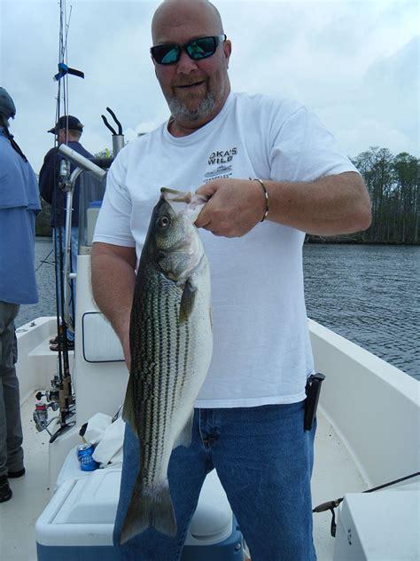 north carolina stripper fishing jpg 800x1067